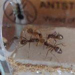 Ameise wird ausgepackt - Detailansicht
