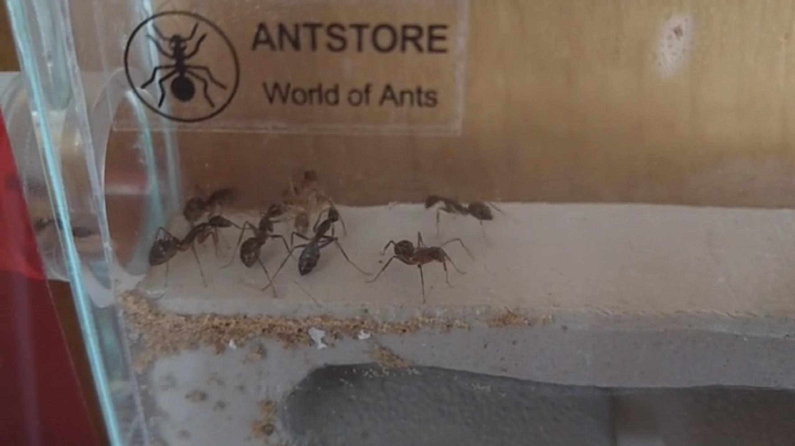 2/2 Erste Schritte einer Ameise